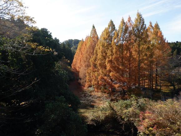 三石山紅葉